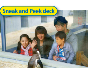 watching penguins deck