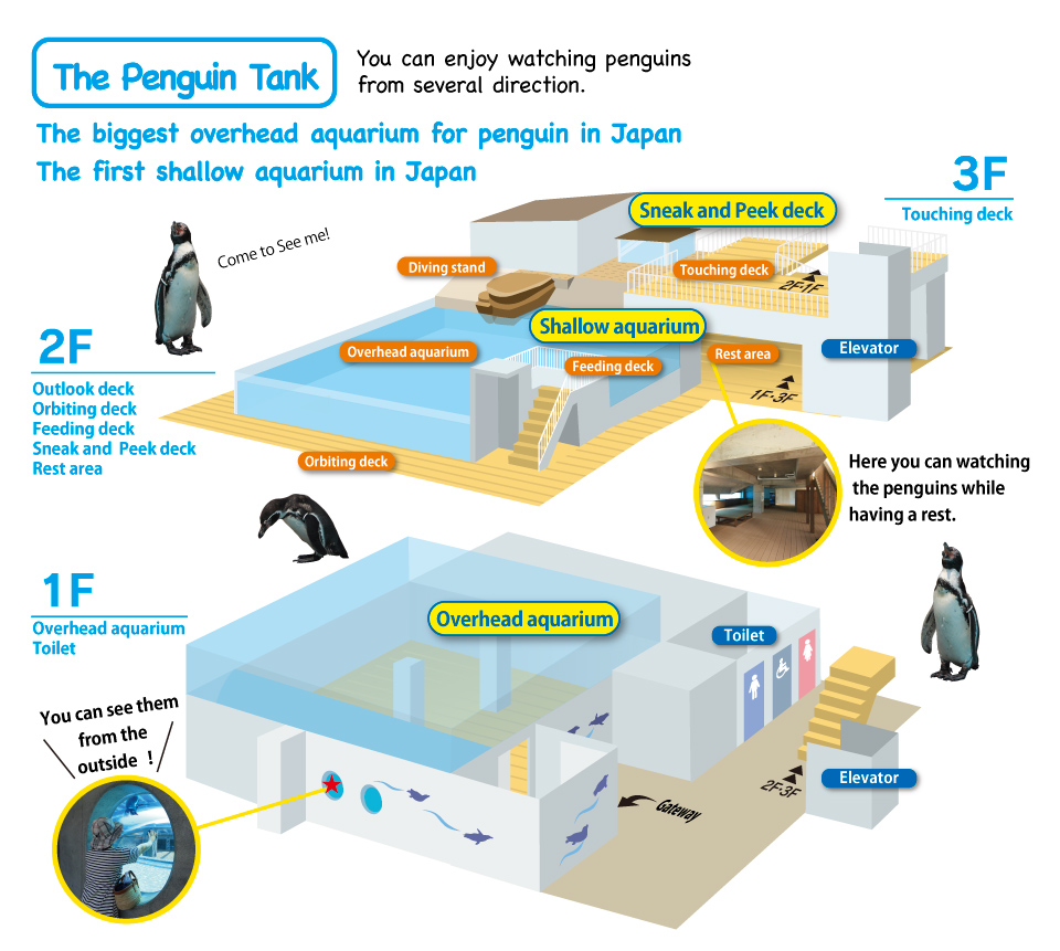 You can enjoy watching penguins  from several direction. The biggest overhead aquarium for penguin in Japan / The first shallow aquarium in Japan