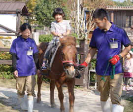 Tsushima domestic horse ride